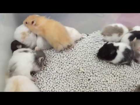 small pets - hamster baby - hamster baby care