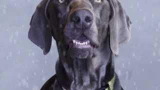 """Walter's 2014 """"epic Split"""" Parody - Doggy Style"""