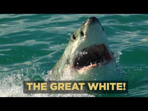 Michael Phelps vs Great White Shark - Behind the Scenes