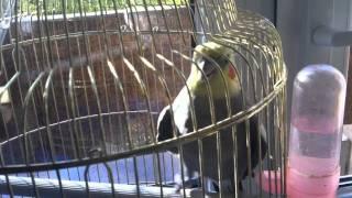 Кеша хороший(Типа говорящий попугай., 2011-12-12T11:41:52.000Z)