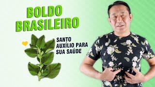 Os Benefícios do Boldo Brasileiro – Santo Auxílio para sua Saúde