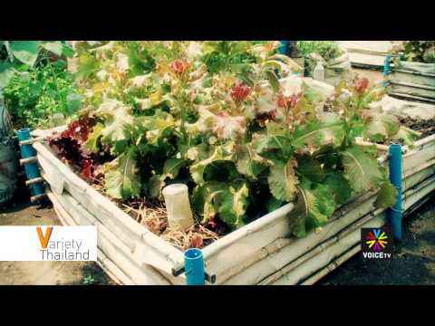 Variety Thailand with Grace Robinson: Organic Way Farm
