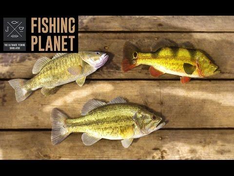Игра Симулятор рыбалки - играть онлайн бесплатно