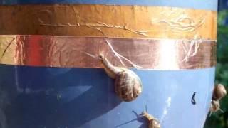 slakken houden niet van koper, slugs don't like copper