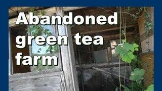 Abandoned green tea farm 放棄された緑茶ファーム - Abandoned Japan 日本の廃墟