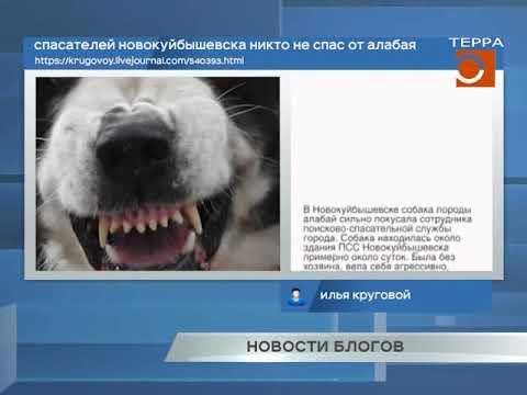 Новости блогов. Эфир передачи от 05.04.2019