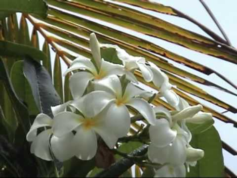 The only complete guide to the Cook Islands - part 1 of 2