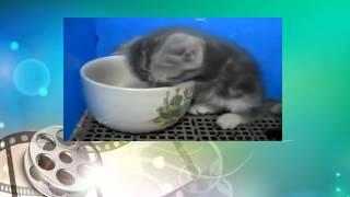 Котэ отжигает. Котенок засыпает прямо в миске. Funny animals