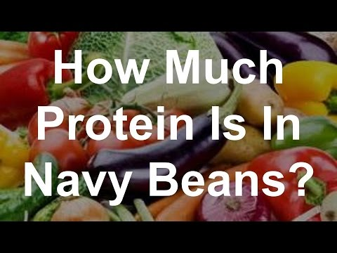 How Much Protein is in Navy Beans?