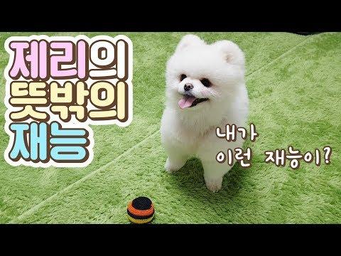 형 강아지를 이긴 동생강아지(Feat.스카이캐슬)