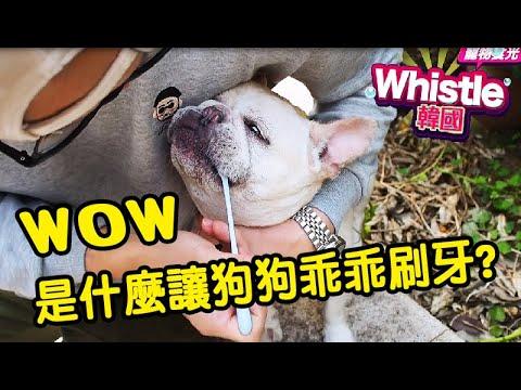 天啊是什麼讓狗狗乖乖刷牙了?狗狗嘴巴臭到不行主人怎麼親親