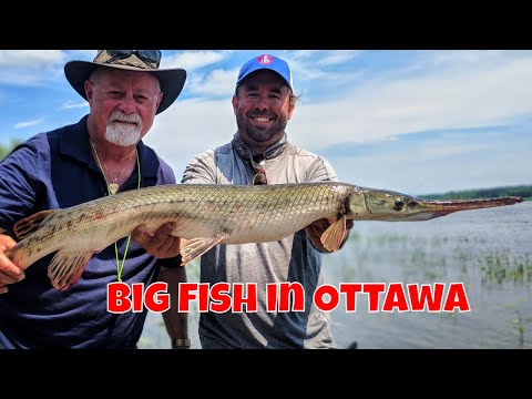 Urban Fly Fishing In Ottawa |Rising Sun Charters