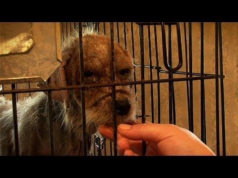 Flea Market Breeder's Cruelty Exposed