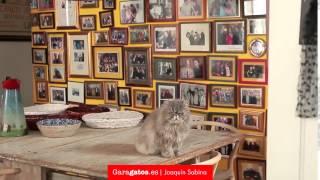 Sabina | Garagatos - Gato sabinero