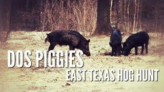 Hog Hunt With Silencer | Dos Piggies