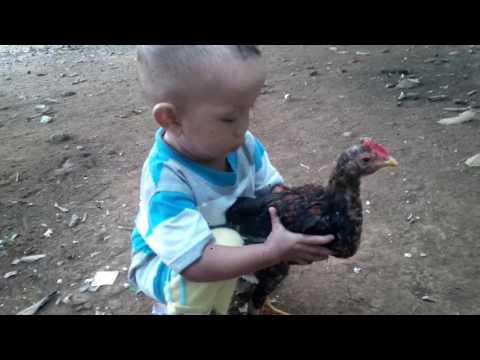 CCTV Anak kecil lucu bermain Ayam Bangkok @Khenzie El Fathin Kharisma