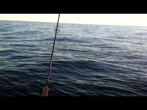 Barwon Banks Great White shark
