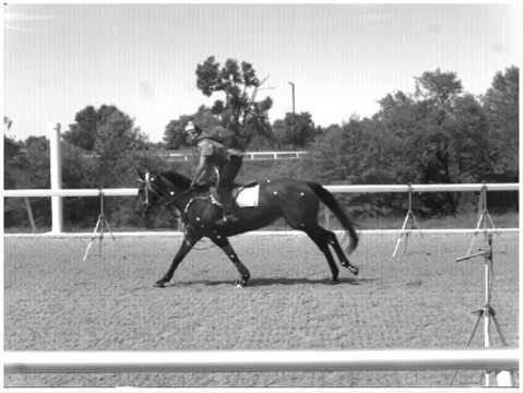 UC Davis Horse Racetrack Surface Study