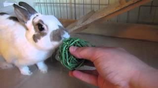 Budgetbunny: Rabbit Cage Tours September 2012