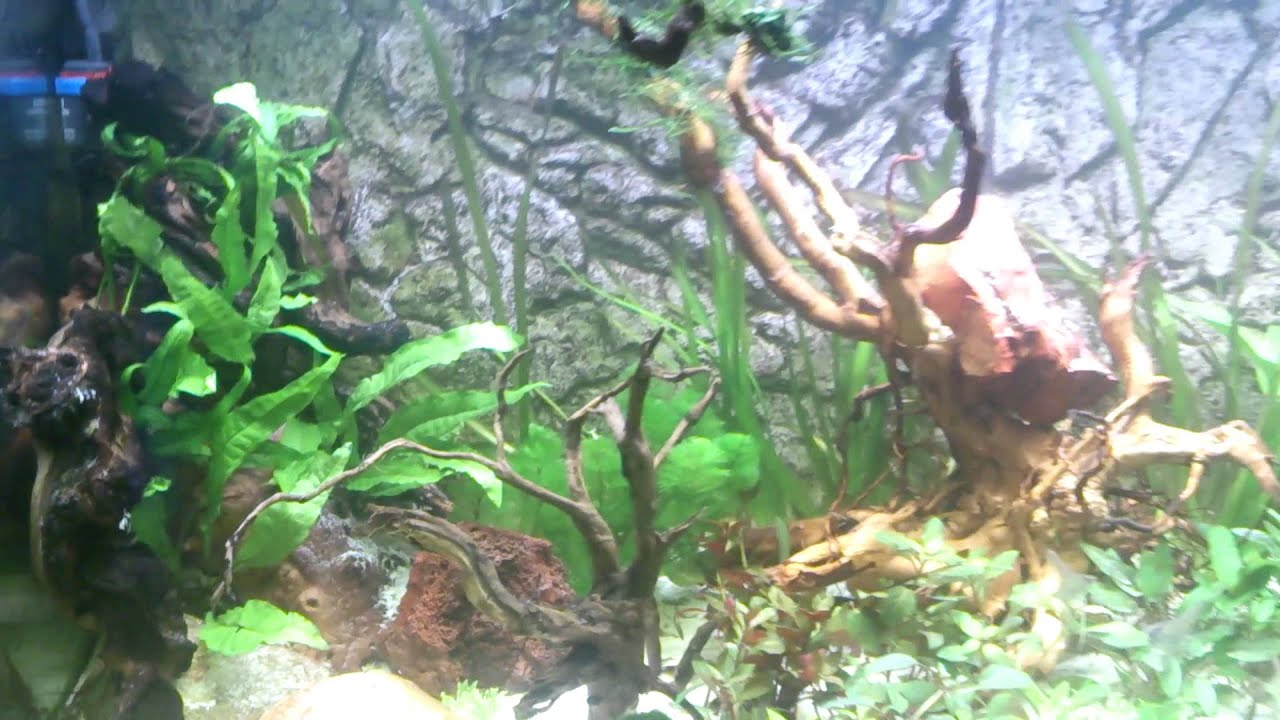 Planted Aquarium Juwel Rio 300