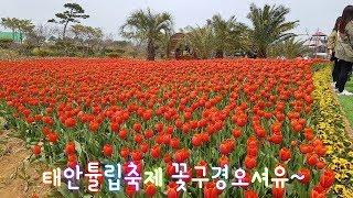 2019 태안 튤립축제  [4k]