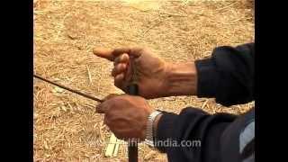 Poachers fill muzzle-loader guns with gun powder, for poaching!