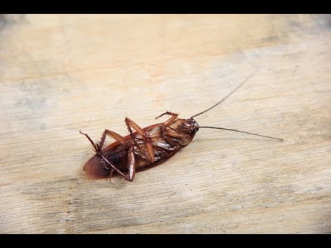 The Eddie Foxx Show - Name a Cockroach After Your Ex For Valentines Day
