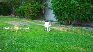 Funny Cats  And Cute Cats