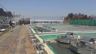 「藻類バイオマス」実験施設 つくば市に完成