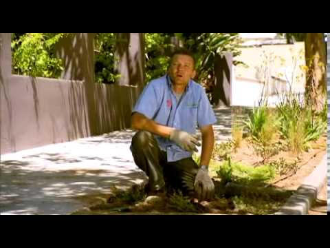 Greenfingers episode 8: How to create a waterwise verge