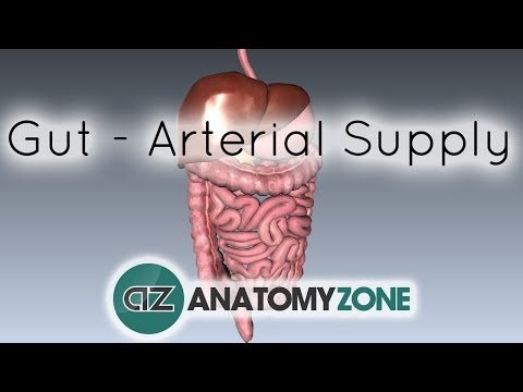 Blood Supply to the Gut (Introduction) - Part 1 (Arterial Supply)
