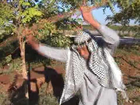OZAN ONUR Pop Arabik