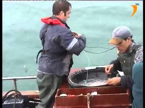 Pesca de palangre de superficie para la pesca de lubina