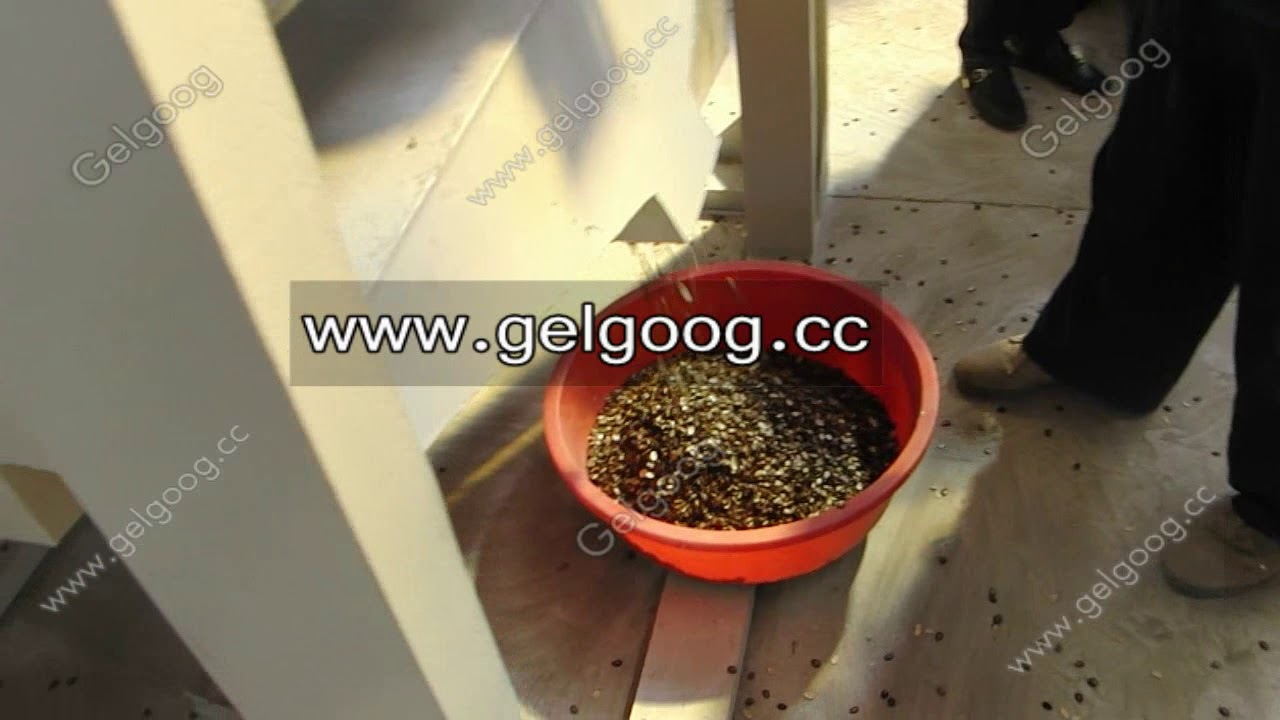 how to eat muskmelon seeds