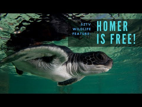 Homer is Free! | SZtv Wildlife Feature