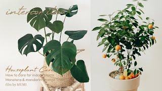 SUB) 반려식물 키우기 추천 • 몬스테라 가지치기 &…