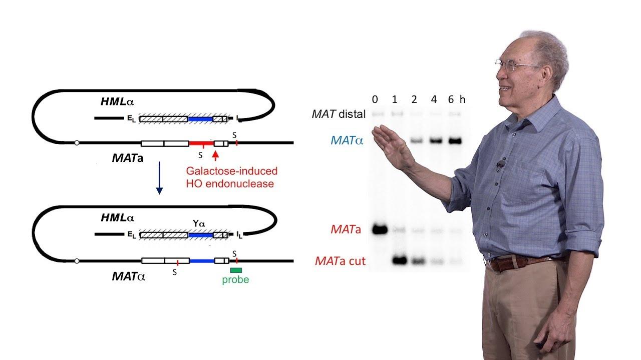 James Haber (Brandeis) 2: Molecular Mechanisms of Repairing a Broken Chromosome