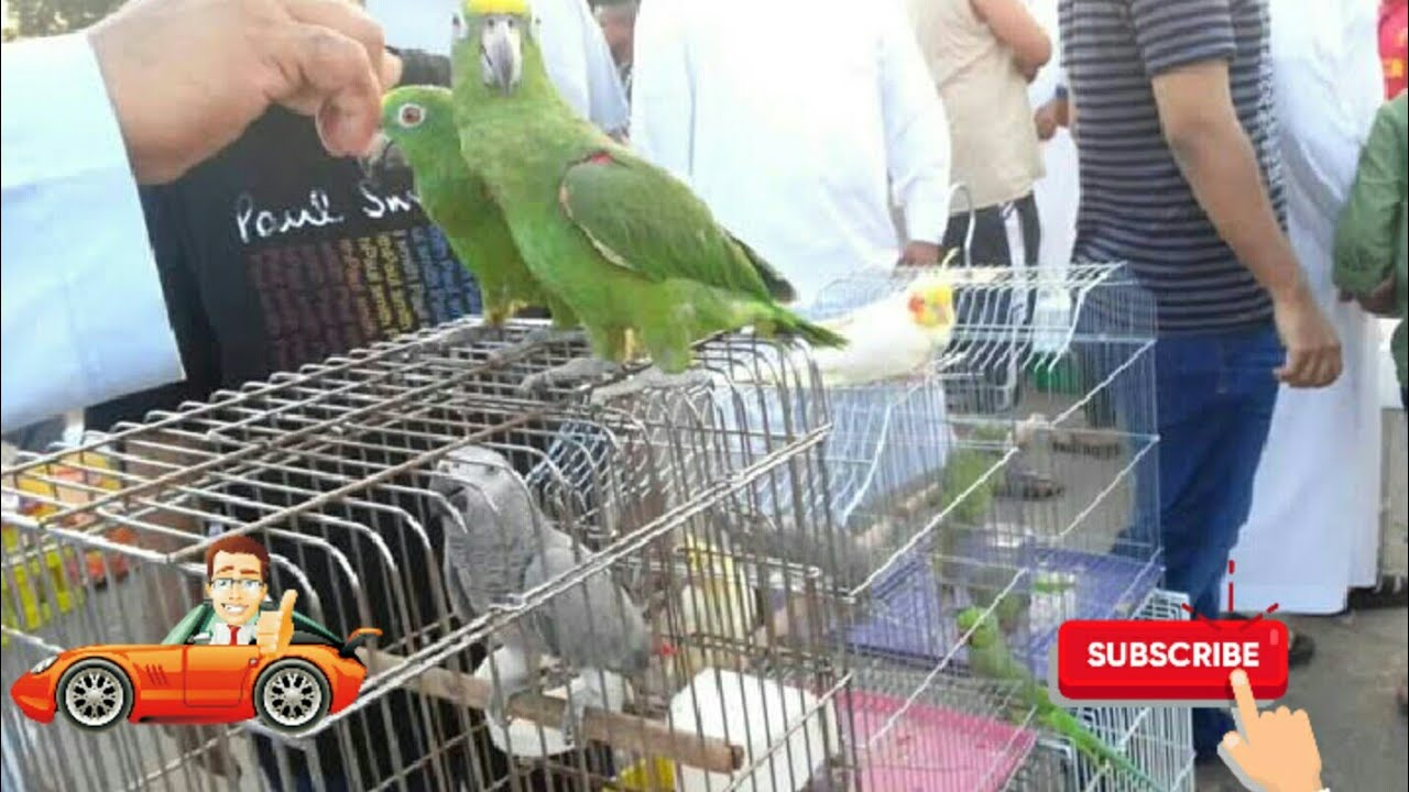 Biggest Bird Market in Khulna,Noyabati