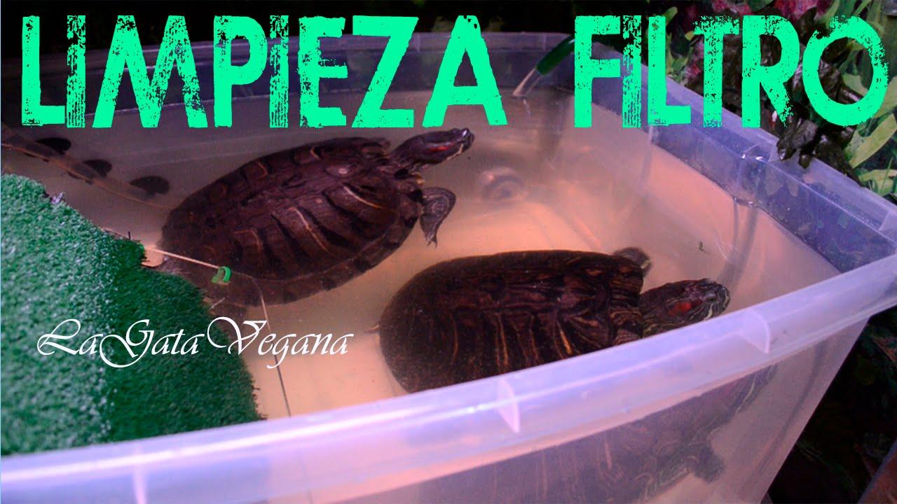 Como limpiar un filtro para tortugas consejos para for Filtro para estanque de tortugas