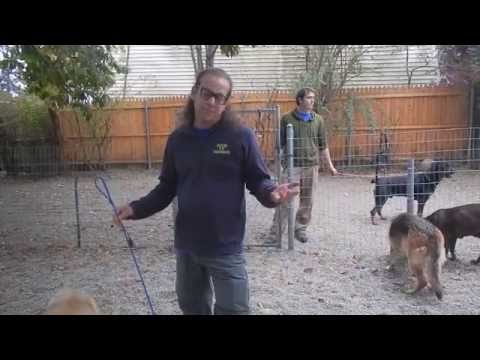Aggressive Dog Intro To Pack Solid K9 Training Youtube