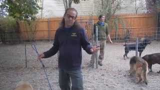 Aggressive Dog Intro To Pack  Solid K9 Training