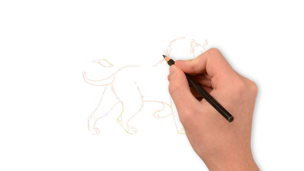 How To Draw A Lion Step By Step Drawing Guide Using Pencil Learn To Draw A Lion Step By Step