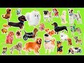 Learn the cartoon dogs breeds | Popular cartoon dogs and their real animals for children
