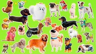 Öğrenmek karikatür çocuk doğurmak | Popüler çizgi film köpekler ve gerçek hayvanlar köpekler