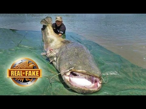 MAN CATCHES GIANT FISH - real or fake?
