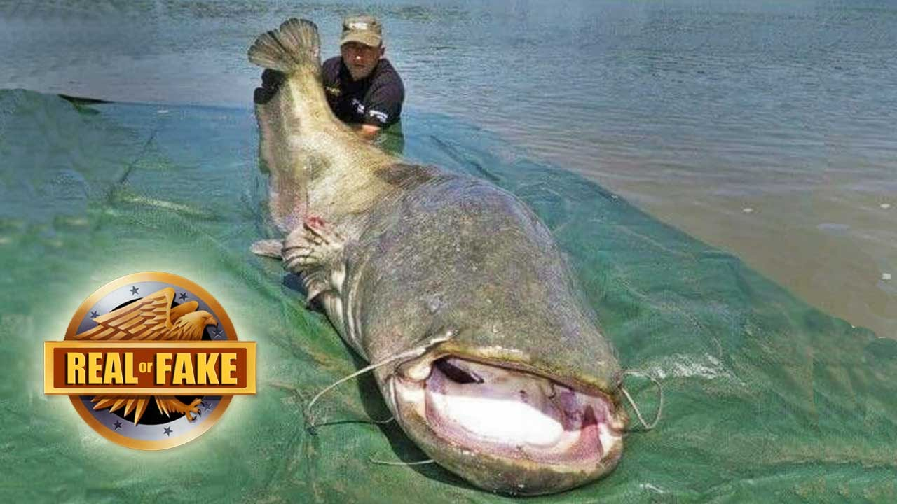 man catches giant fish real or fake youtube