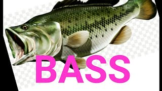 ИНЬ и ЯНЬ В поисках Bassa Спиннинг против мормышки рыбалка Спиннинг fishing bass spinning