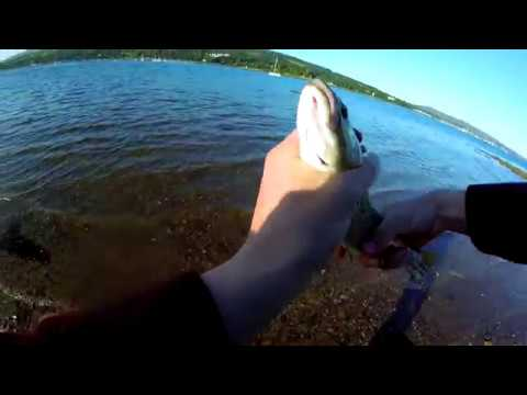 Sea Trout Fishing | West Of Scotland