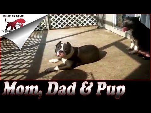 Dad and son breeding