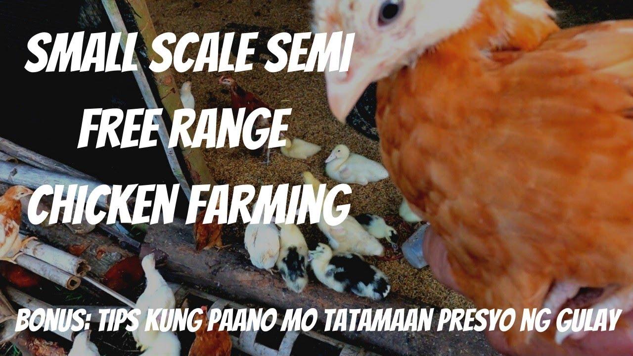 Download UPDATE SA SEEDLINGS FARM + PAGSISIMULA NG MALIIT NA MANUKAN + TIPS SA MAGANDANG PRESYO NG ANI